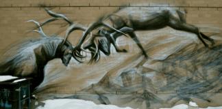 Locked horns graffiti in Toronto, photo by Mary Crandall