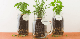 Mason jars with herbs, photo by Shutterfly