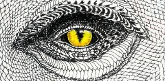 The Wild Unknown: Animal Spirit, by Kim Krans