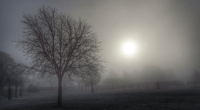 Trees in fog, photo by Broo_am (Andy B)