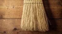 Broom, photo by Bob Jagendorf