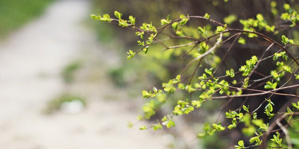 Greenery, photo by Iryna Yeroshko