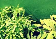 Herbs, photo by En Bouton
