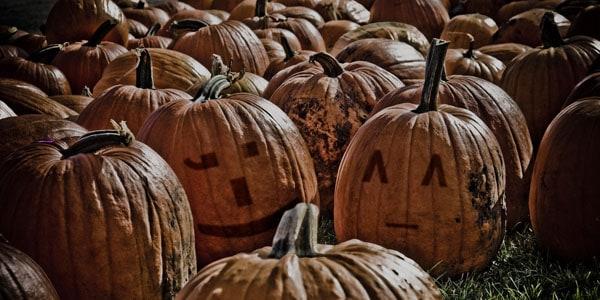 Pumpkin patch, photo by Dan Bergstrom