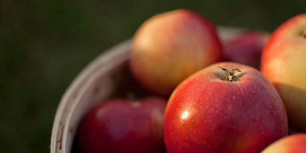 Red devil apples, photo by Dave Gunn
