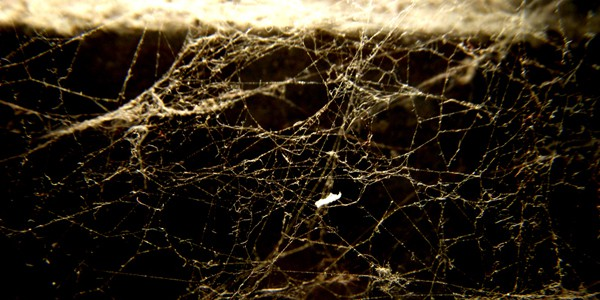 Webs, photo by William Ismael