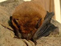 Batty goings on in Orkney