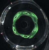 vortex dans un fluide en rotation