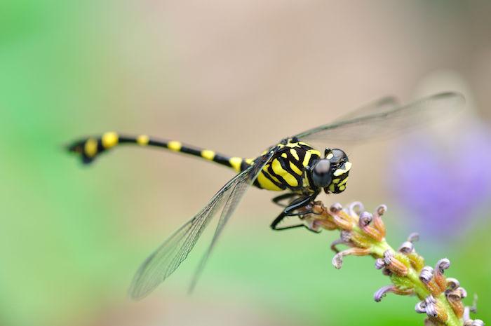 Dragonfly Totem Amp Spirit Animal Meaning