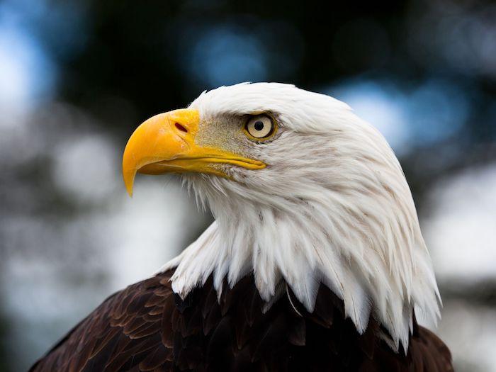 Snoqualmie Falls Wallpaper Eagle Spirit Animal