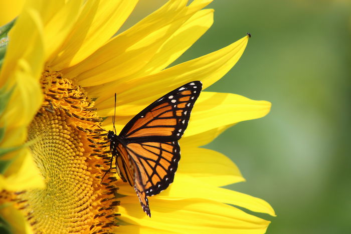 Image result for butterflies images