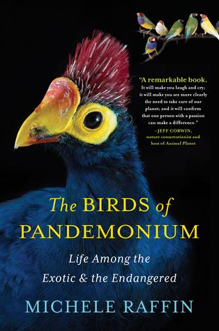 The Birds of Panedomium
