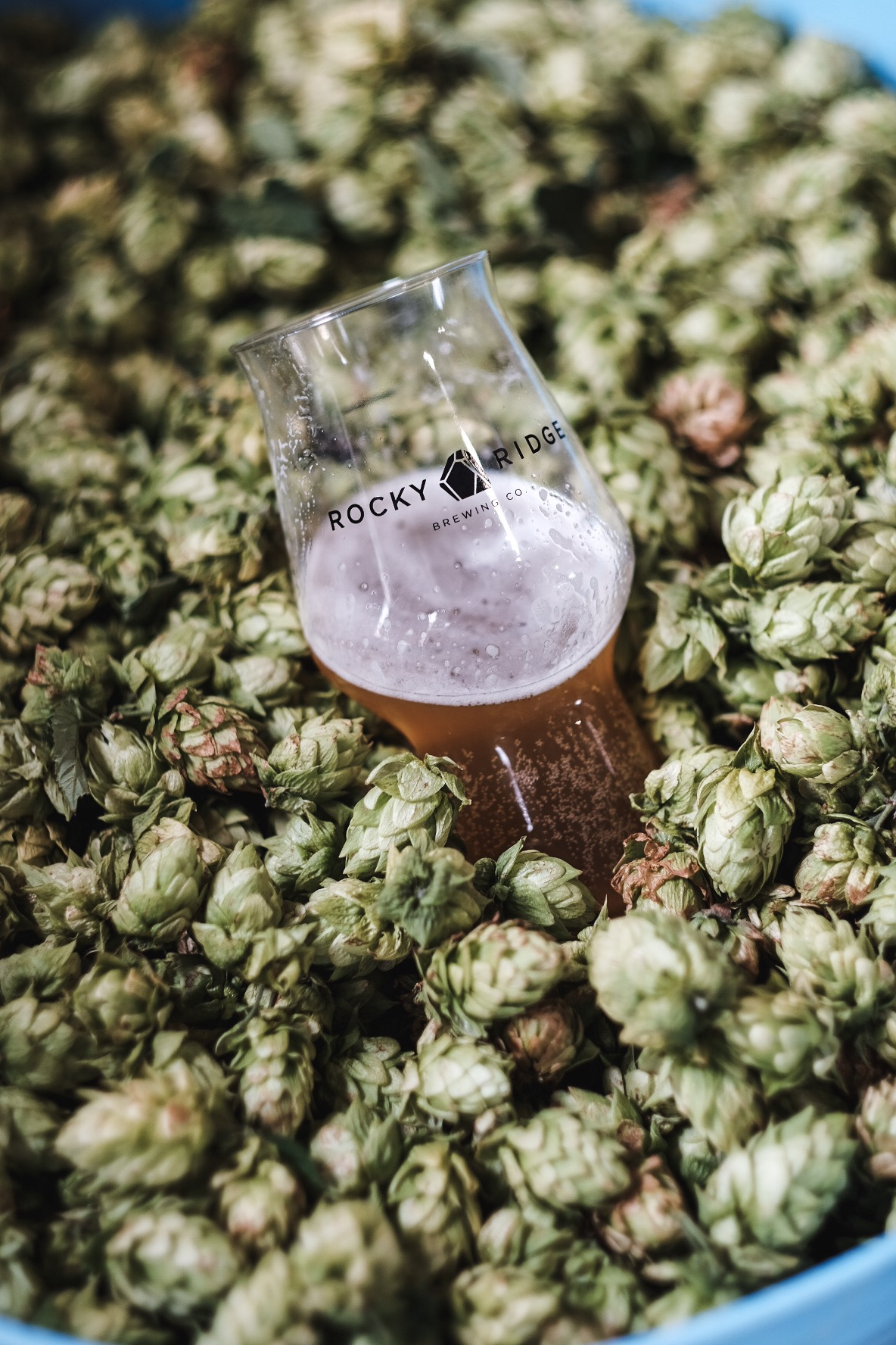 Spiritedsingapores Guide To Beer Styles At Beerfest Asia 2018