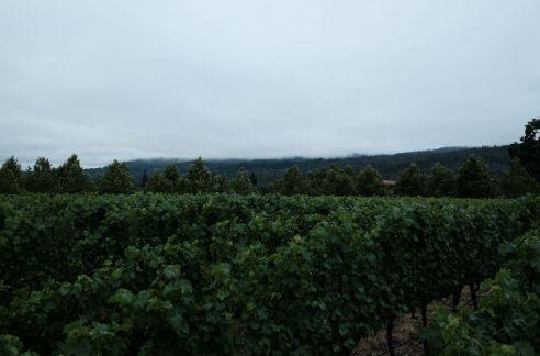 Napa Valley fog