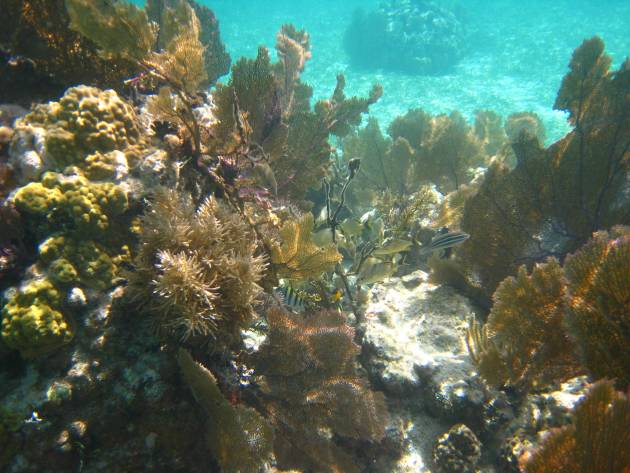 picture - nice coral