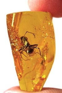 bug in amber