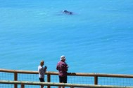 nullarbor-bight-whale-watching-10