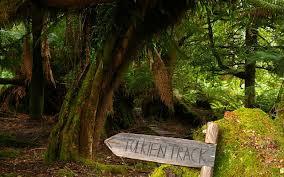 Tasmania Wilderness Explorer Tour Stix Forest walk
