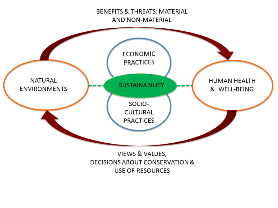 Fig. 1 Kulak