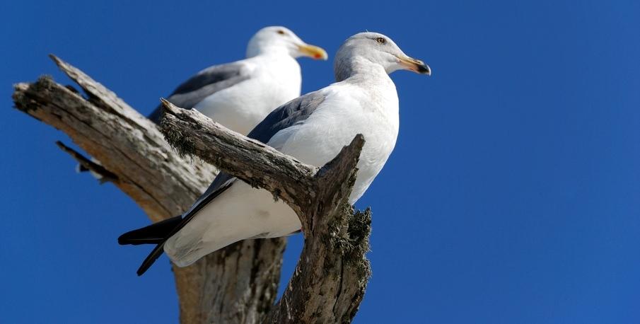 A bird's eye view of health