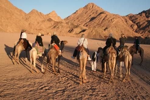 people riding camels in desert