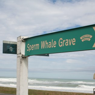 whale graveyard in New Zealand