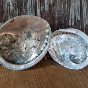 Abaloneschelp