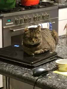 Stary cat in Yad Hashmona finds a home