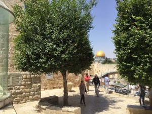 Overlooking the Western Wall and the Dome of the Rock