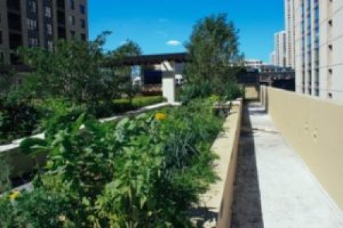 The AMLI River North garden is located on the residential rooftop along with other amenities like an outdoor kitchen and grilling stations. (Photos: Courtesy of The Organic Gardener)