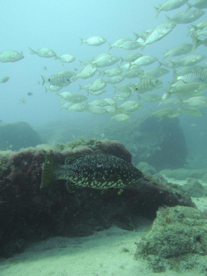 Diving the marine reserve Arinaga, Gran Canaria