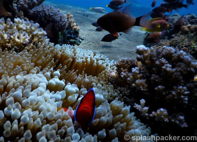 Dauin scuba diving photo with Nikon Coolpix dive camera