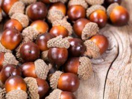 acorns-2-300x225