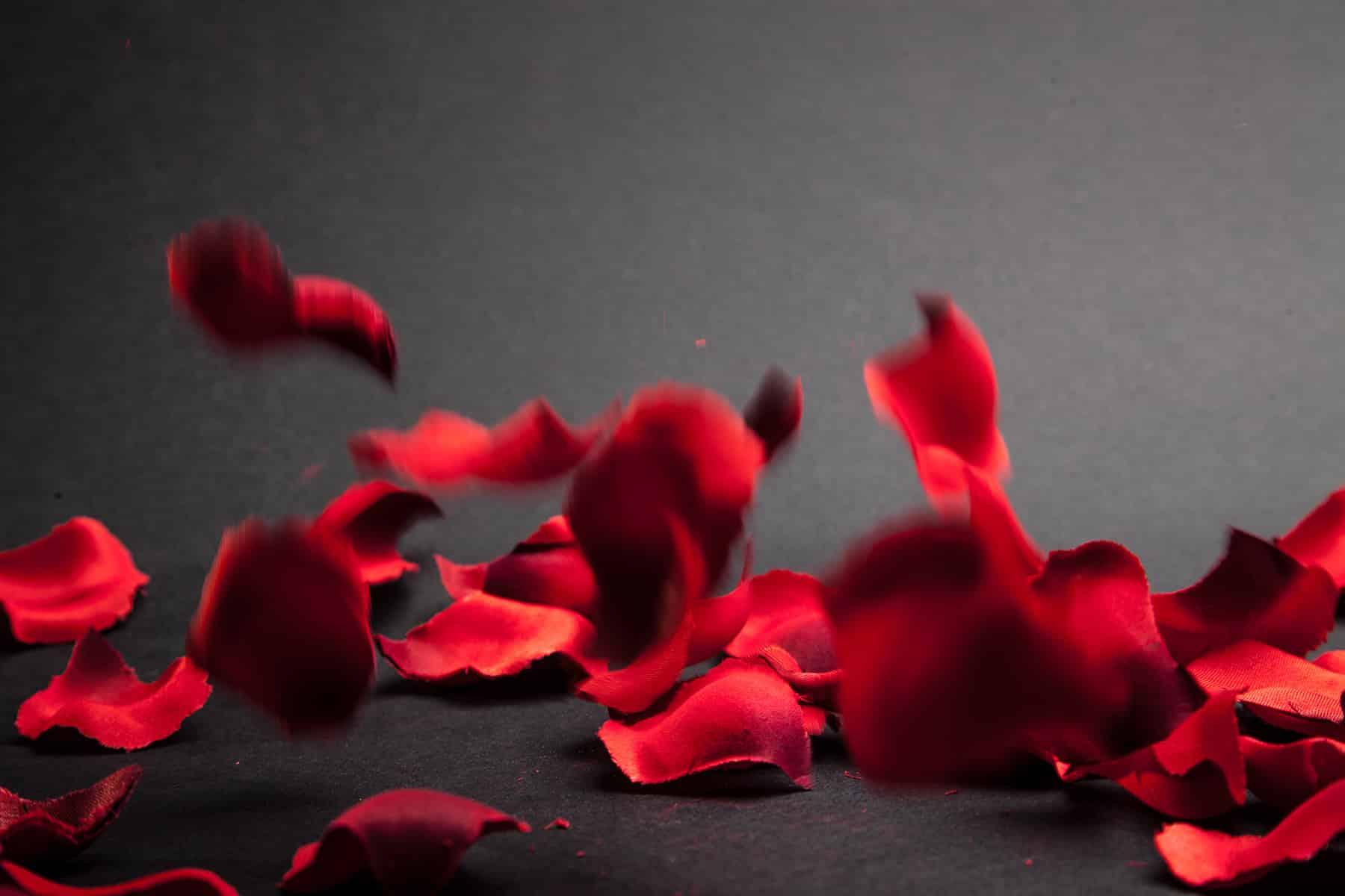 falling petals splitshire
