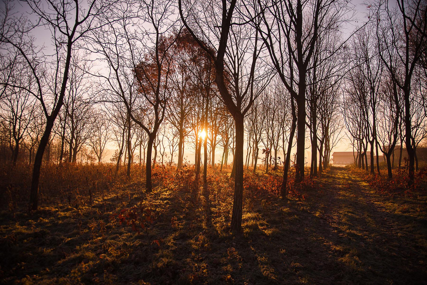 Free Fall Season Wallpaper Sun Rays Through Trees Splitshire