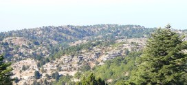 Mountainous forest dominated by Turkey Oak, Fir, Cedar of Lebanon and Juniper, with Calabrian Pine found at lower altitudes