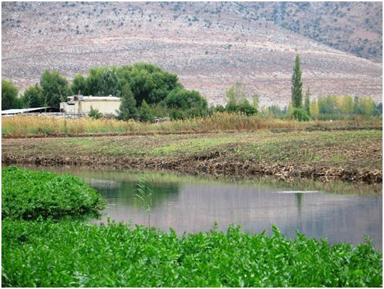 Hima KfarZabad Pic 1
