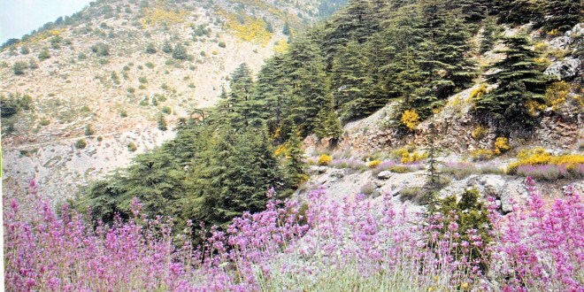 The largest Nature reserve in Lebanon (approx. 5% of the Territory) encompassing the best remaining strand of cedar forests where over 160 bird species