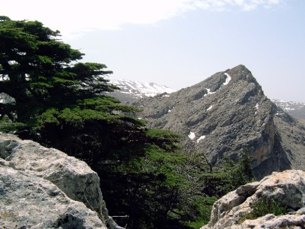 The reserve is part of the largest remaining Cedar forest in Lebanon.