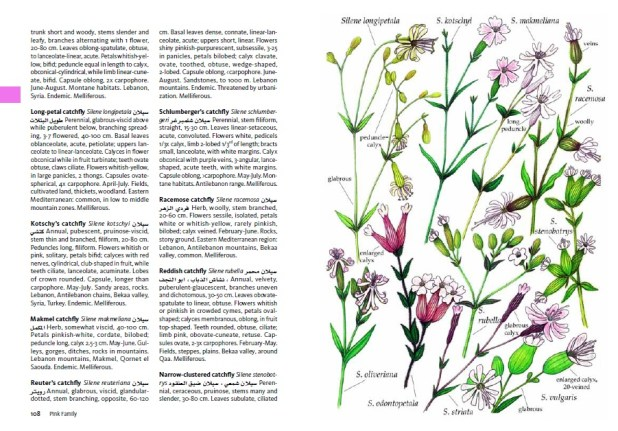 Long-petal catchfly