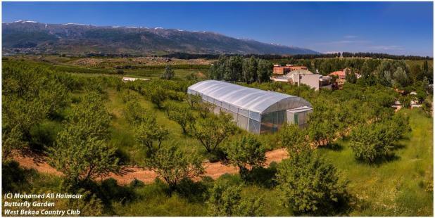 SPNL tree and plants nursery butterfly garden
