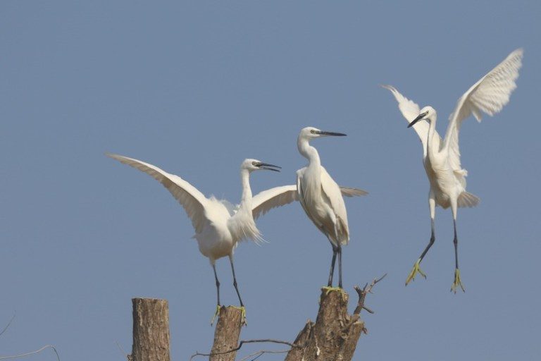 Safe Flight for Migratory Birds
