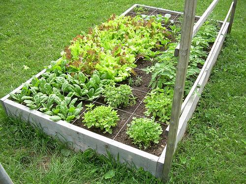 Square Foot Gardening Is For Everybody Including YOU! South