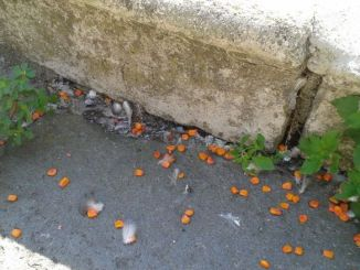 Esche avvelenate a Forca di Cerro, interviene polizia provinciale