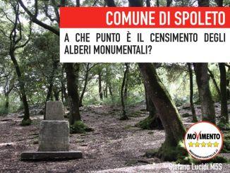 Censimento alberi monumentali, comune Spoleto deve fare di più