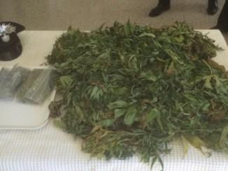 Coltivava marijuana illegalmente, arrestato a Campello sul Clitunno