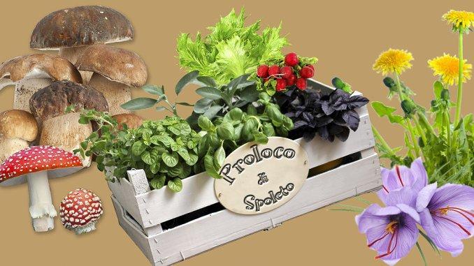 Mostra Mercato funghi ed erbe spontanee, la 24esima dall'1 al 4 novembre