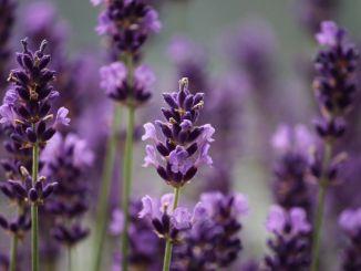 Spoleto in Fiore … profumo di primavera dal 31 maggio al 2 giugno