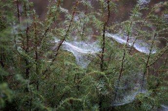 Spinnweben