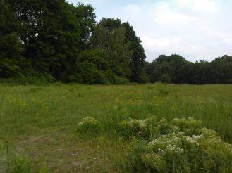 Ina - Stille Orte - Wuhlheide Drachenwiese